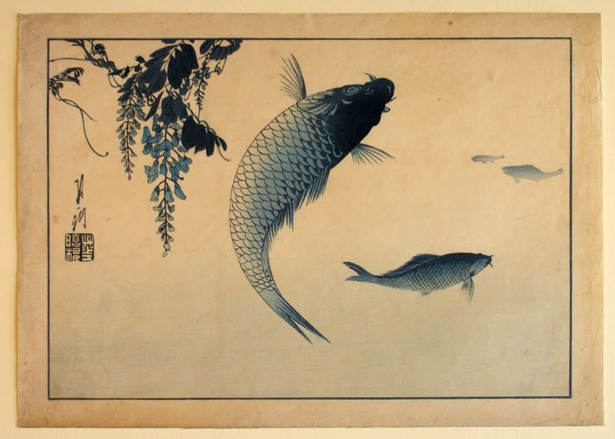 Aizuri-e Carp and Wisteria